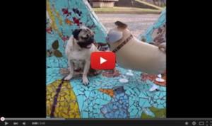 Best-of-Doug-the-Pug---YouTube