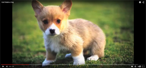 God-Made-a-Dog---YouTube-2015-11-06-11-54-12