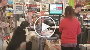 cute pooch choose its own dog treats at the pet store