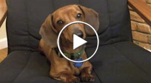 Watch the funny way Beans the Hotdog reacts to a sad song.