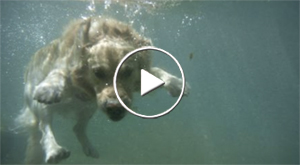 Dogs in freshwater ponds