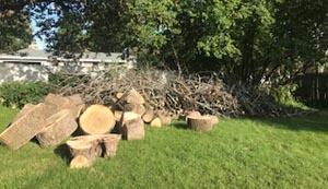 Wood in my yard