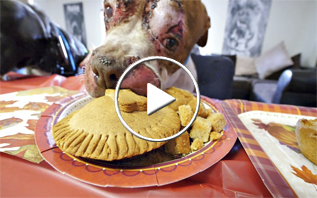how to create a Thanksgiving meal for shelter dogs