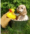 Dog taking a bat in a bucket