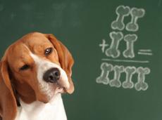 dog in front of green blackboard