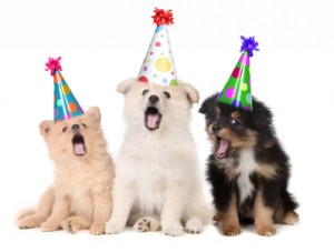 3 dogs in birthday hats singing