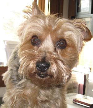 trixie the wonder dog