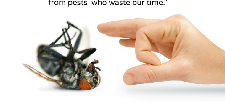 pests--give pests the flick -- we don't want crappy follow-upsbs
